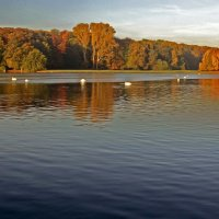 Осень на лебедином озере :: Alexander Andronik