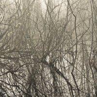 Кустики болотные :: Владимир Гилясев