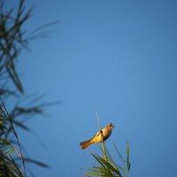 На ветках бамбука :: Александр