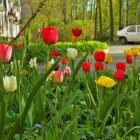Весна в моем дворе... :: Sergey Gordoff