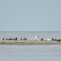Птичьи острова :: Yelena LUCHitskaya