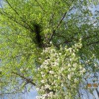 весна :: Smit Maikl