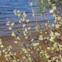 Весна :: Ирина - IrVik