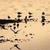 Чайки :: Константин Чебыкин