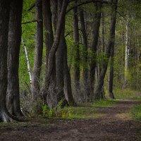 Вдоль больших деревьев :: Алексей (GraAl)