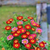 Краски весенней Италии :: Natali Positive