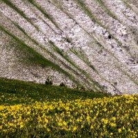 Цветы в горах :: Владимир Богославцев(ua6hvk)