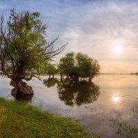 Ивы и солнечное гало :: Фёдор. Лашков
