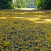 Желтая дорожка... :: Alex
