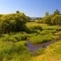 Летняя река :: Анатолий Иргл