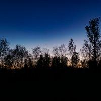 Деревья :: Шахин Халаев