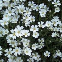 Цветы мая :: Dana