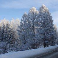 Иней на деревьях :: Галина Козлова