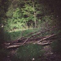 Дорога в лесу :: Михаил Сандарьян