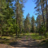 Весенний лес :: Алексей (GraAl)
