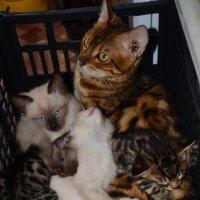 Где чей котенок? :: Aleksandr Ivanov67 Иванов