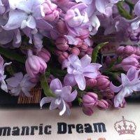 Dream*мечта :: °•●Елена●•° ♀