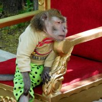 Грустная обезьянка :: Надежда