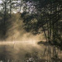 туман 5 :: Геннадий Свистов