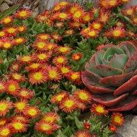 Цветочки, ботанический сад Маримутра :: Лариса