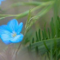 Небесный цвет. :: Николай Малявко