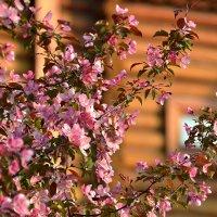 Весна в Коломенском :: НАТАЛИ natali-t8