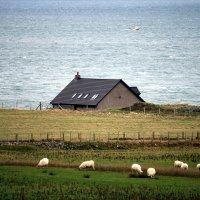 Домик у моря, или шотландская пастораль...(Мы бедные овечки..., никто нас не пасет...) :: Olga