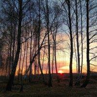 По небу солнце разливает краски ... :: Татьяна Котельникова