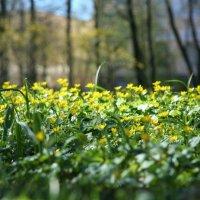 Цвет весны :: Екатерина