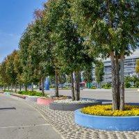 Сочи. Олимпийский парк :: Николай Николенко