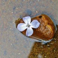 Цветок , камень и река . :: Святец Вячеслав