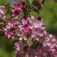 весна :: Петр Беляков