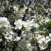 Весна :: Лариса