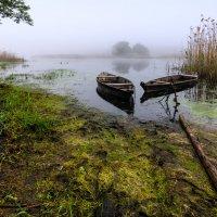Туманное утро. :: Владимир M