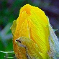 Цветущий май :: Люба (Or.Lyuba) Орлова