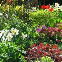 Пик цветения первоцветов в моем саду :: Татьяна$