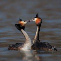 Про поцелуй :: Pepsovich