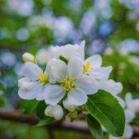 Весна :: Юра Викулин