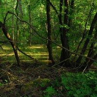 Найти семь отличий от лета :: Андрей Лукьянов