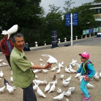 Порт-Артурские голуби :: Ирина Червинская