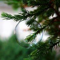 Хрупкое новогоднее украшение. Праздновать придётся быстро... :: Dmitry Saltykov