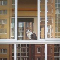 кошка и город :: Лера