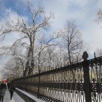 ограда Юсуповского сада :: Елена
