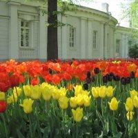 Фестиваль тюльпанов на Елагином острове :: Маера Урусова