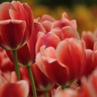 Краски Весны... :: mirtine
