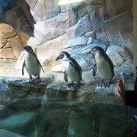 заглянуть к пингвинам :: Олег Лукьянов