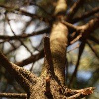 Дерево в лучах заката :: Черси Доллар