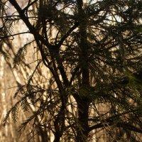 Дерево на закате :: Черси Доллар