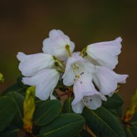 Цветите , радуйте.. :: Андрей Нибылица