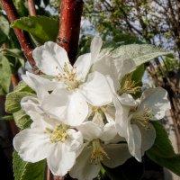 Пора цветения :: Наталья Ильина